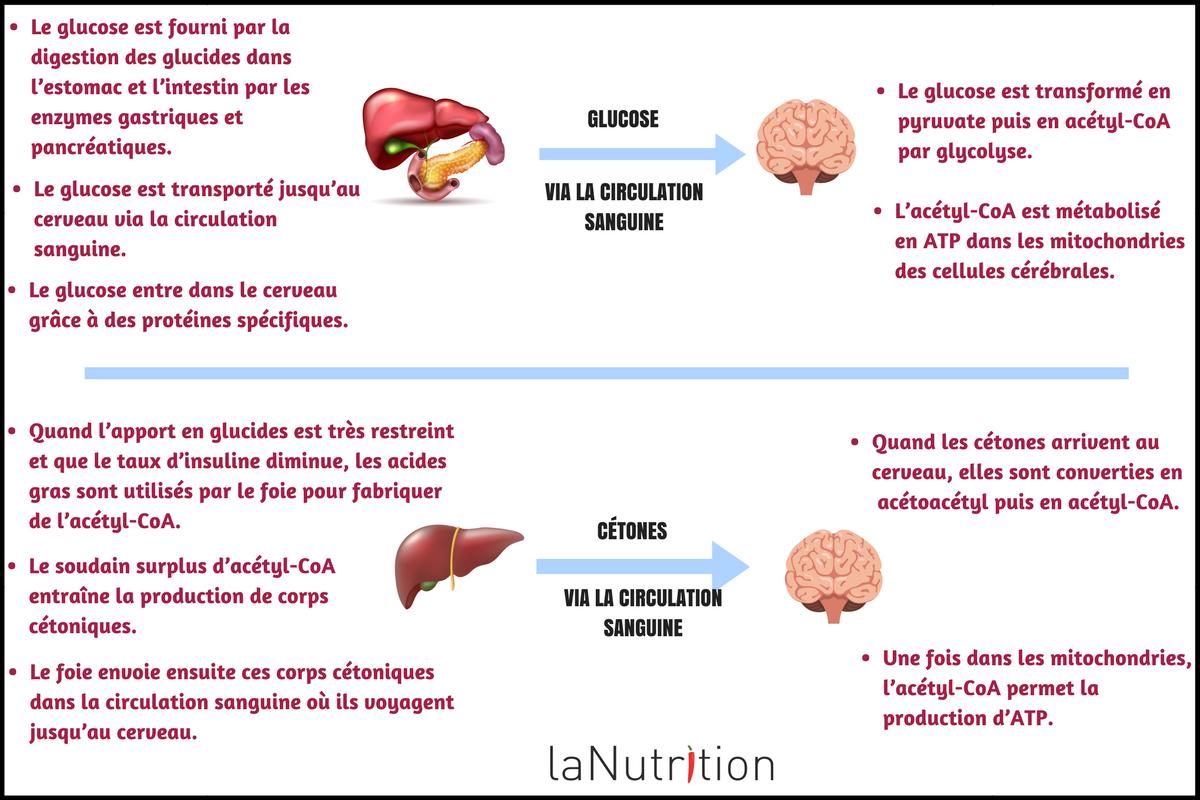 corps cetonique cerveau