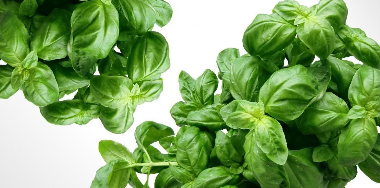 Cinq Plantes Aromatiques Pour Son Jardin Ou Son Balcon Lanutrition Fr