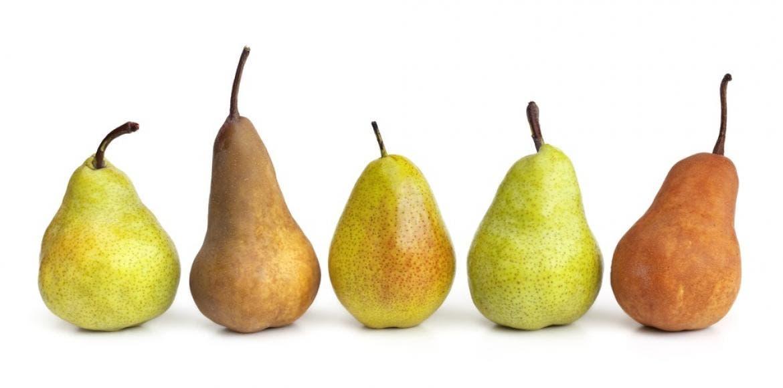 Les variétés de poires : types, sortes, espèces, propriétés ...