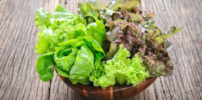 Laitue types vari t s et caract ristiques des laitues - Variete de salade d hiver ...