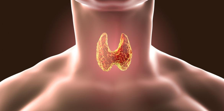 Hypothyroïdie : causes et symptômes   LaNutrition.fr