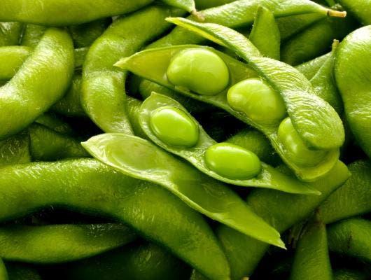 Soja origines et histoire d 39 o vient il - Comment cuisiner les germes de soja frais ...